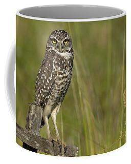 Burrowing Owl Stare Coffee Mug