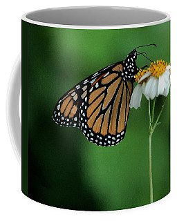 Coffee Mug featuring the photograph Butterfly 3 by Leticia Latocki