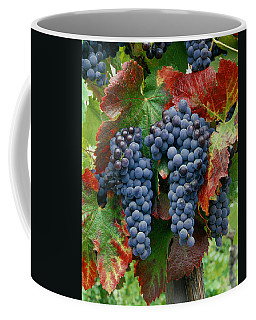 5b6374-cabernet Sauvignon Grapes At Harvest Coffee Mug