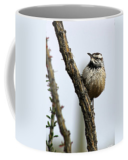 Cactus Wren Coffee Mug by Elaine Malott