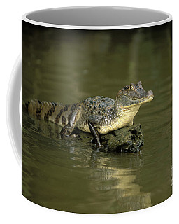 Caiman Crocodile Coffee Mug