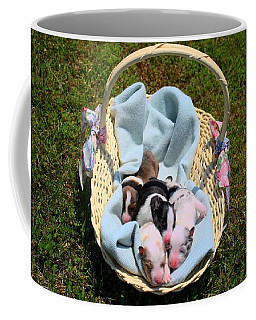 Calicos Pups At Two Days Coffee Mug by Kathryn Meyer