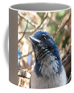 California Western Scrub Jay Coffee Mug