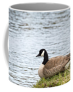 Coffee Mug featuring the photograph Canada Goose by Michael Chatt