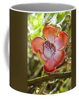 Cannonball Tree Flower Hawaii Coffee Mug by Venetia Featherstone-Witty