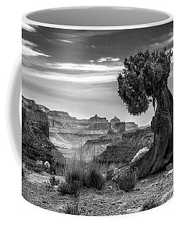 Canyon And Twisted Pine Coffee Mug