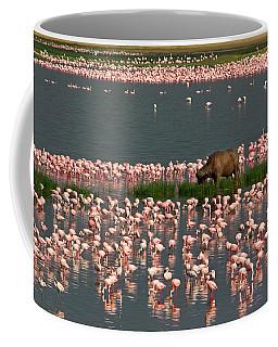 Cape Buffalo And Lesser Flamingos Coffee Mug