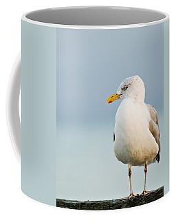 Cape Cod Seagull Coffee Mug