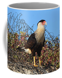 Coffee Mug featuring the photograph Caracara In The Dunes by Debra Martz