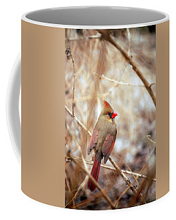 Coffee Mug featuring the photograph Cardinal Birds Female by Peggy Franz