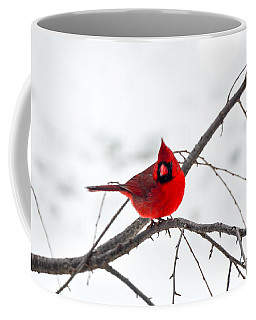 Cardinal On A Branch  Coffee Mug