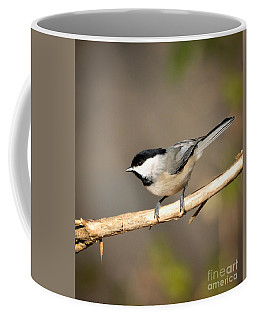 Coffee Mug featuring the photograph Carolina Chickadee  by Kerri Farley