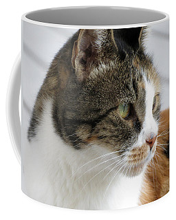 Coffee Mug featuring the photograph Cat by Laurel Powell
