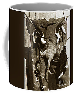 Coffee Mug featuring the photograph Cat Tails By Henry King Nourse Circa 1900 Historical Photos by California Views Mr Pat Hathaway Archives