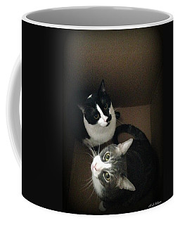 Tabby Cat Kitten Photography Pets  Coffee Mug