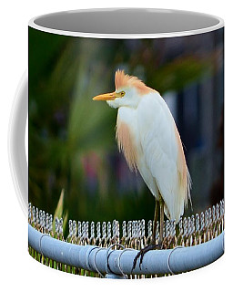 Coffee Mug featuring the photograph Cattle Egret Breeding Plumage by Debra Martz