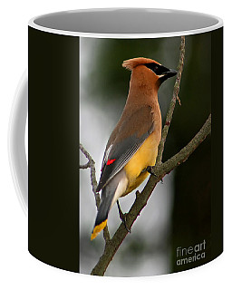 Cedar Wax Wing II Coffee Mug