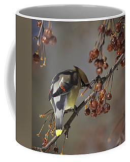 Cedar Waxwing Eating Berries 7 Coffee Mug