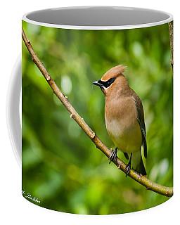 Cedar Waxwing Gathering Nesting Material Coffee Mug