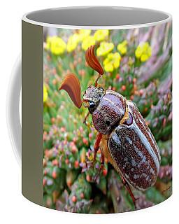 Chafer Beetle On Medusa Succulent 2 Coffee Mug