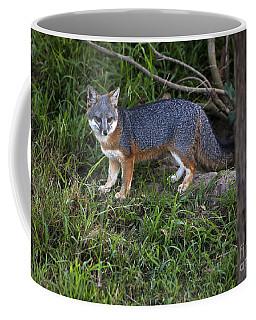 Channel Island Fox Coffee Mug
