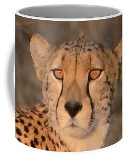 Coffee Mug featuring the photograph Cheetah Gaze At Sunset by Tom Wurl