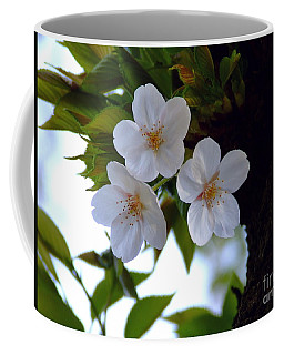 Coffee Mug featuring the photograph Cherry Blossom by Andrea Anderegg