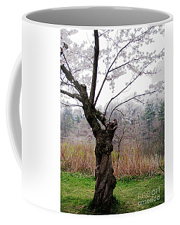 Coffee Mug featuring the photograph Cherry Blossom Time by Nina Silver