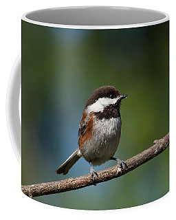 Chestnut Backed Chickadee Perched On A Branch Coffee Mug