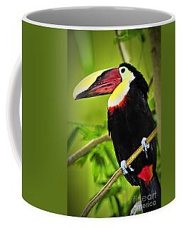Chestnut Mandibled Toucan Coffee Mug