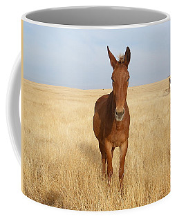 Chestnut Mule In Gold Coffee Mug