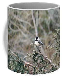 Coffee Mug featuring the photograph Chickadee In Cedar by Brenda Brown