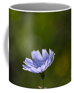 Chicory Flower Closeup Coffee Mug