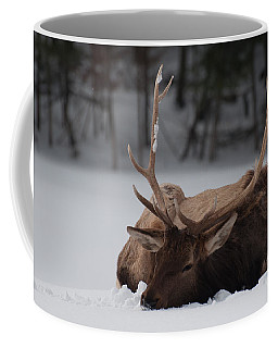 Coffee Mug featuring the photograph Chillin' by Bianca Nadeau