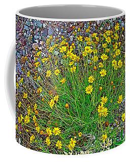 Chinchweed In Big Bend National Park-texas Coffee Mug