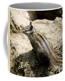 Coffee Mug featuring the photograph Chipmunk On A Rock by Belinda Greb