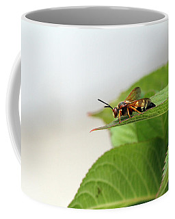 Cicada Killer Coffee Mug