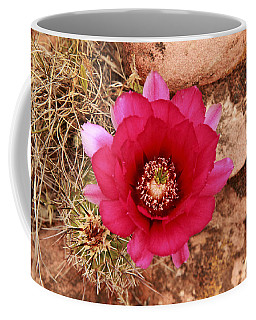 Coffee Mug featuring the photograph Claret Cup Cactus On Red Rock In Sedona by Alan Vance Ley