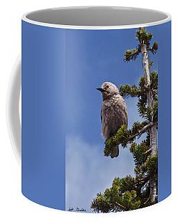 Clark's Nutcracker In A Fir Tree Coffee Mug by Jeff Goulden