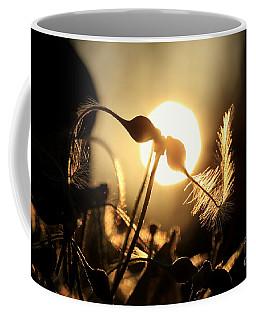 Clematis - Sunset Coffee Mug