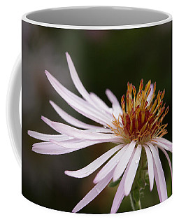 Coffee Mug featuring the photograph Climbing Aster by Paul Rebmann