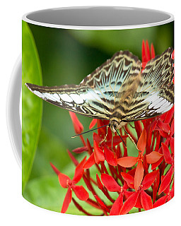 Clipper Butterfly Coffee Mug