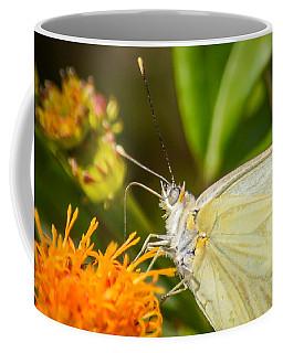 Coffee Mug featuring the photograph Butterfly Attracted To Mexican Flame by Debra Martz