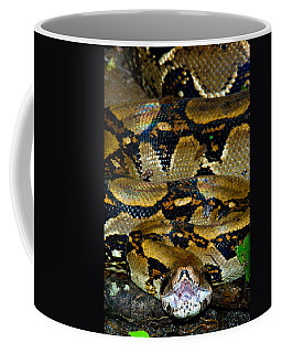 Close-up Of A Boa Constrictor, Arenal Coffee Mug