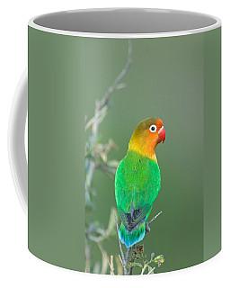 Close-up Of A Fischers Lovebird Coffee Mug