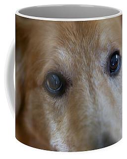Close Up Of A Pet Dogs Eyes Coffee Mug