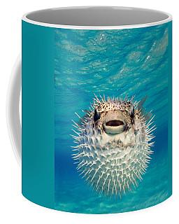 Close-up Of A Puffer Fish, Bahamas Coffee Mug