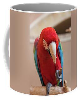 Close-up Of A Scarlet Macaw, Yazd Coffee Mug