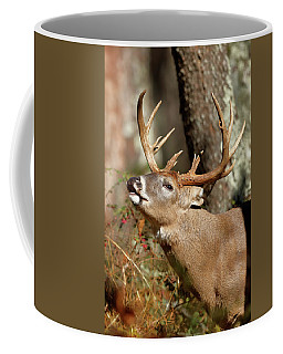 Close-up Of A White-tailed Deer Curling Coffee Mug