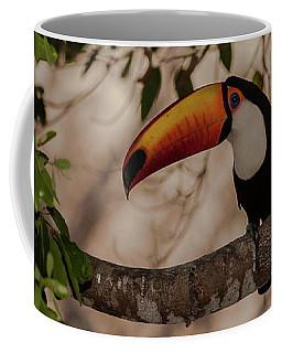 Close-up Of Tocu Toucan Ramphastos Toco Coffee Mug